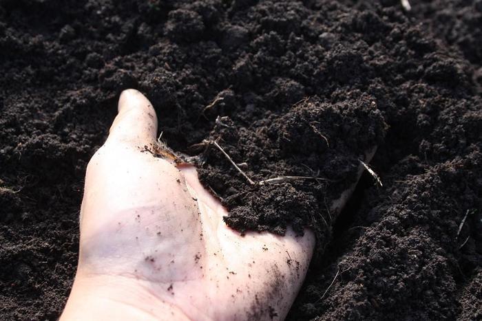 土壌.jpg