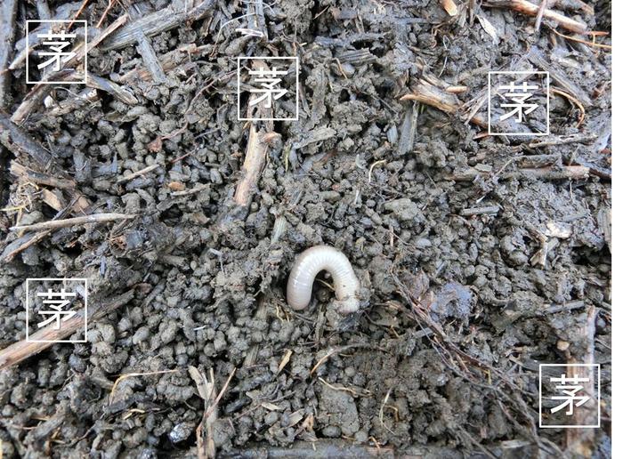 堆肥1-2.jpg
