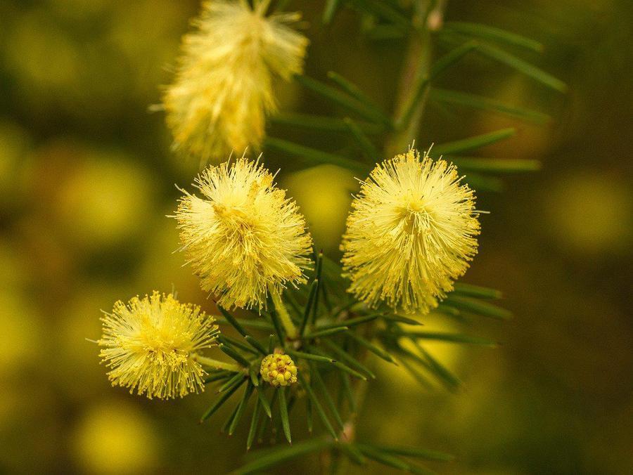 flower-4674615_1280.jpg