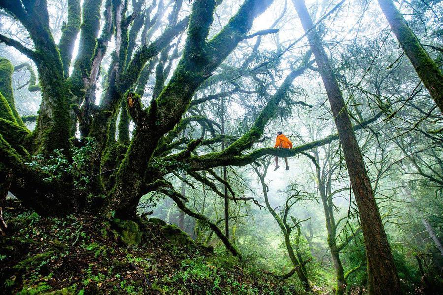 forest-1245692_1280.jpg