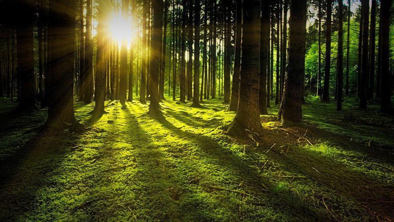 nature-3294681_1280.jpg