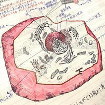 細胞構造のスケッチで「己を知る」を深化